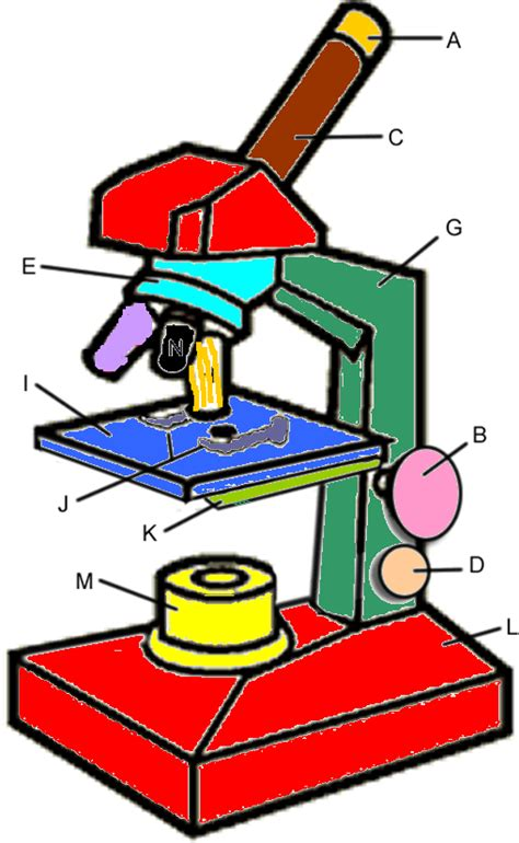 color the microscope parts parts of a microscope worksheet clipart best