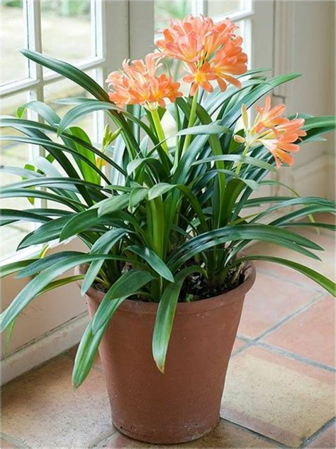 popular houseplants beautiful easy care plants fresh zimmerpflanzen bl 252 hend beleben sie ihr zuhause