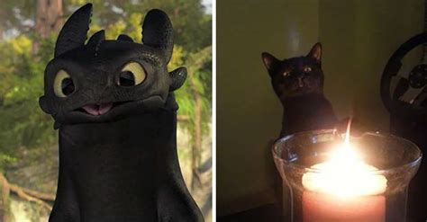 how to your to like cats 10 black cats that are actually toothless in disguise bored panda