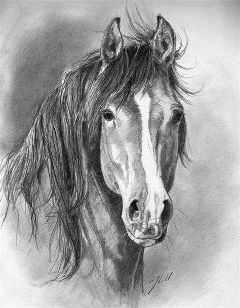 388 best images about horse drawings on pinterest