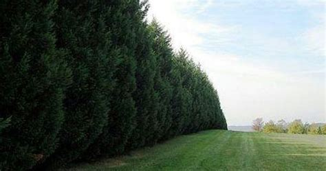 trees as sound barrier gardening outdoors pinterest