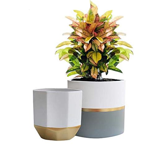 large indoor planters amazoncom