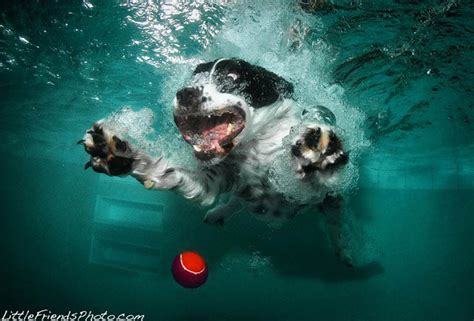underwater   dogs fetching  ball
