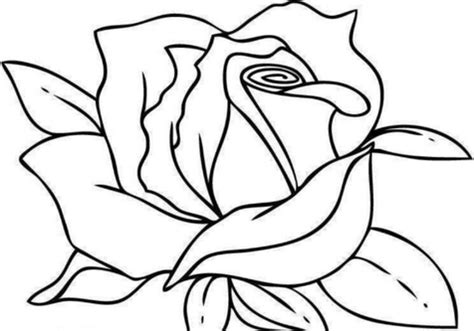 realistic rose coloring page hearts and roses coloring pages rose all grig3 org