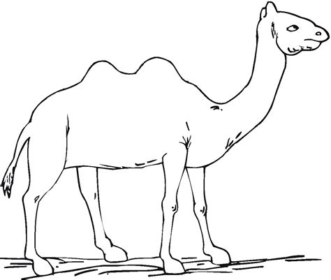 Free Printable Camel Coloring Pages For Kids Color Coloring Pages