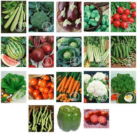 Garden Heirloom Vegetable Seeds Prepper Survival 18 Packs When To Plant Seeds For Vegetable Garden
