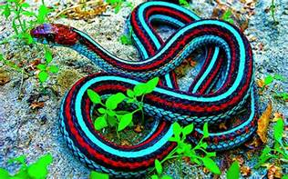 Most Beautiful Colors These Colorful Snakes Are The Most Beautiful Creatures On