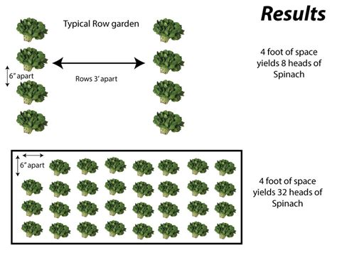 Garden Spacing - efficient plant spacing feed the world