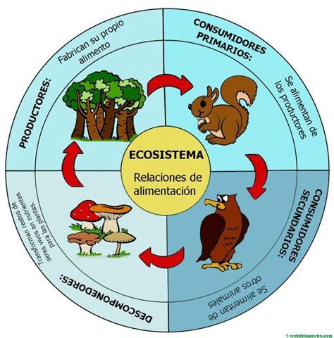cadenas alimentarias y sus elementos ecosistema cadena alimenticia web del maestro