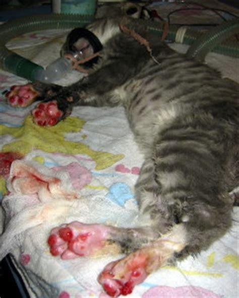 care of injured stray domestic animals at rowena wildlife