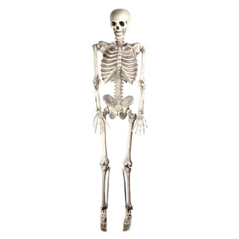 Skeleton Decoration by Skeleton Size Prop Decoration