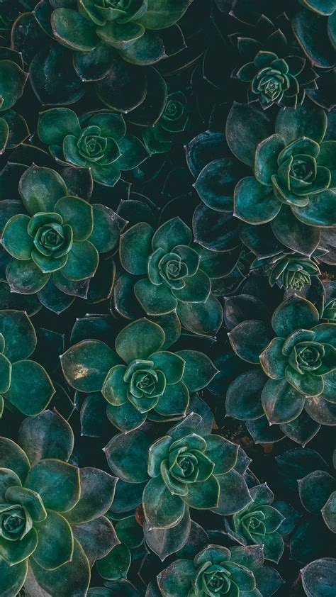 1300 best iPhone Wallpapers. images on Pinterest   Iphone