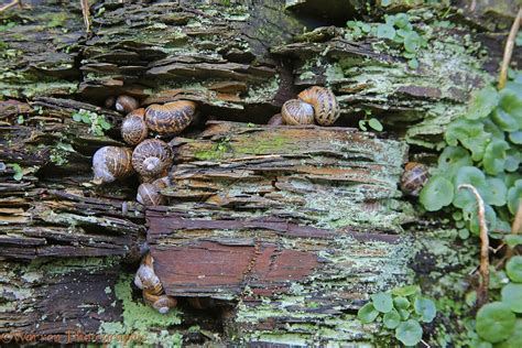 Garden Shale Rock Garden Snails Hibernating Photo Wp38395