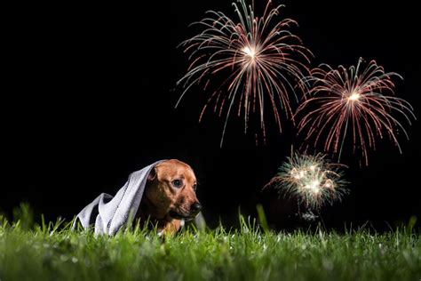 how to comfort dogs during fireworks how to make dogs feel safe during fireworks local news