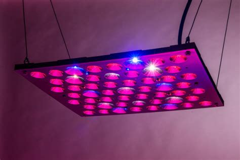 best grow light for bonsai bonsai hero 150 watt led grow light panel review