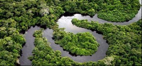 amazon hutan penyerapan gas karbon di amazon menipis