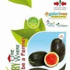 Jual Bibit Pepaya Calina Bogor bibit buah unggul yang tahan penyakit bibit