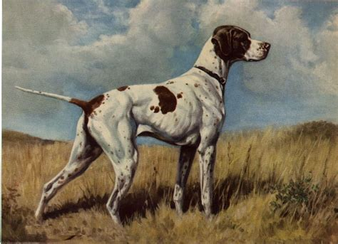 pointers dogs pointer vintage prints gifts and artwork from dogsonthenet