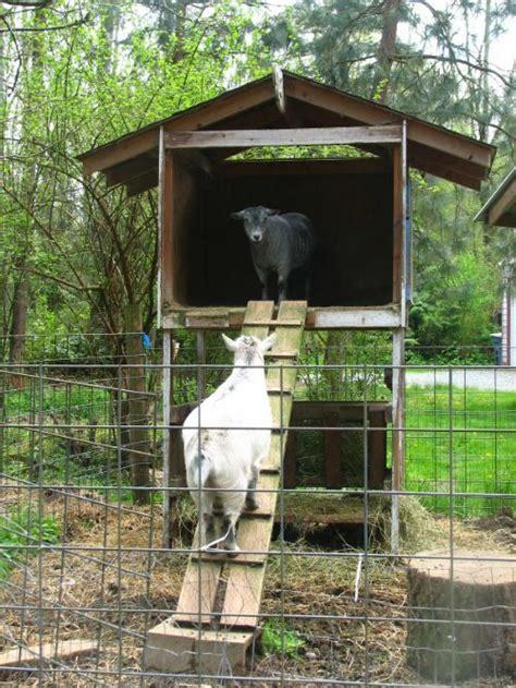 diy  storey goat house