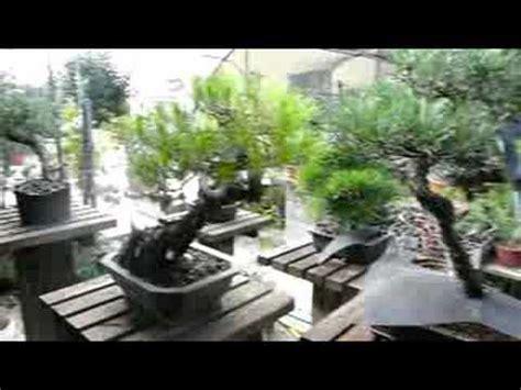 giardini bonsai giardino bonsai