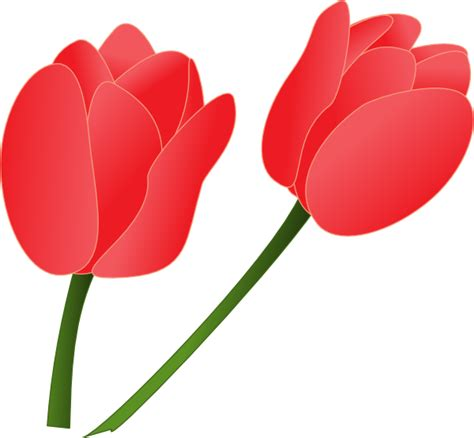 red tulip clip art  clkercom vector clip art