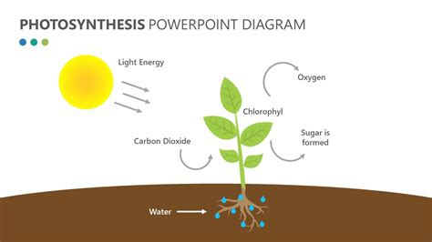 photosynthesis diagrams tree diagram of photosynthesis gallery how to guide and