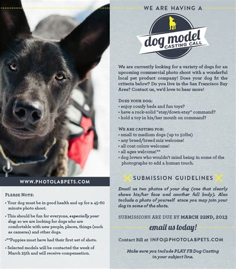 A Call For Model Pets by Pin By P L A Y Pet Lifestyle And You On P L A Y Pet