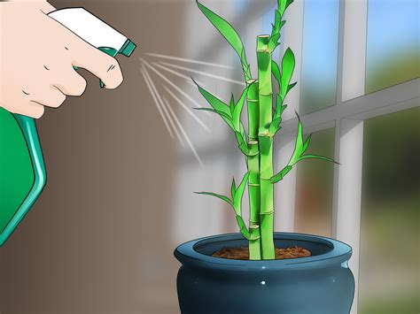 3 simple ways to care for an indoor bamboo plant wikihow