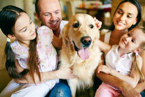 breeds for families 10 best breeds for families with children