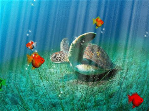 mobile wallpaper nature gif download sea world1 320 240 gif animated wallpape 320 x
