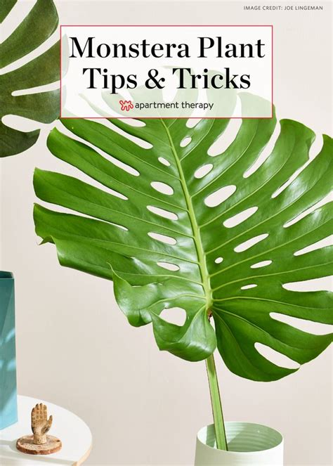 monstera care 822 best plant filled homes images on