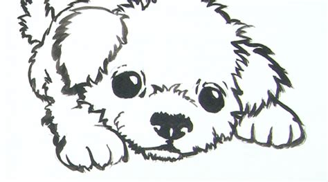 how to puppy drawing illustration lessons montmarte international pty ltd