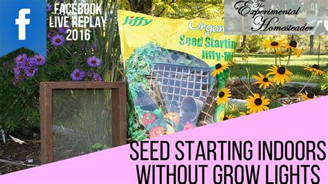 starting seeds indoors lights seed starting indoors without grow lights live