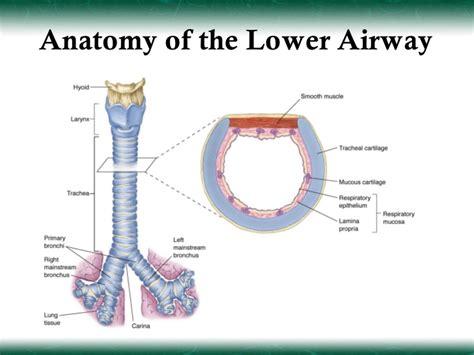 intubation diagram airway