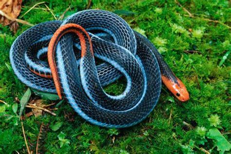 imagenes impresionantes de serpientes fotos las serpientes multicolor m 225 s impresionantes de