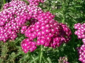 perennial flower garden designs elaoutdoorliving com