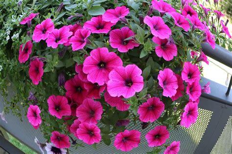Garten Pflanzen Direkte Sonne by Blumen Die Sonne Vertragen Blumen Die Nicht Viel Licht