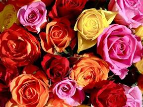 different colors of roses sending the right message the color of a it