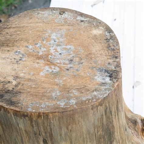 how to a table from a tree a tree stump side table