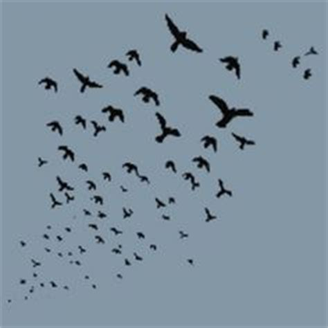 1000 images about birds flying on pinterest bird flying
