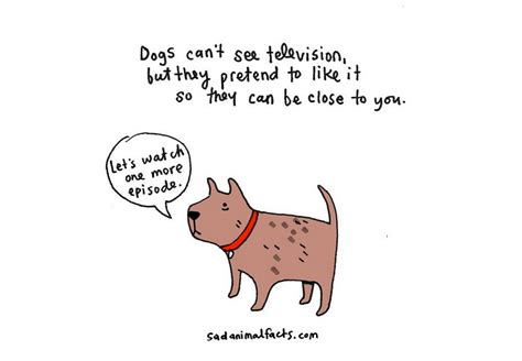 sad animal facts animal fact illustrations that are so cute but kind of depressing at the same time