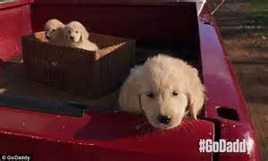 golden retriever budweiser commercial godaddy s bowl advert starring buddy the golden retriever causes uproar as