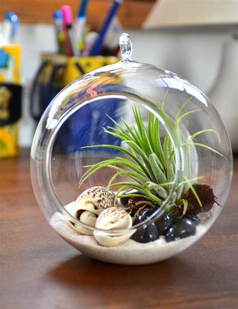 air terrarium   bangalore delivery greenmylife