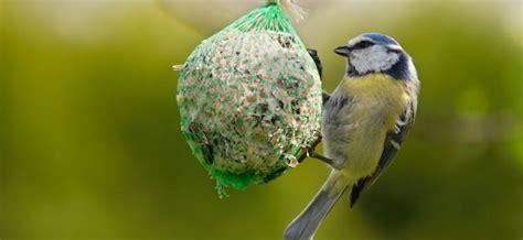 alimentazione uccelli alimentazione migliore per uccelli granivori insettivori