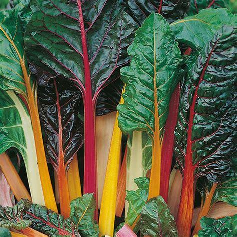 Harga Bibit Oregano jual benih tanaman mr fothergills di indonesia