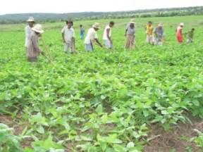 agricultura tradicional rio