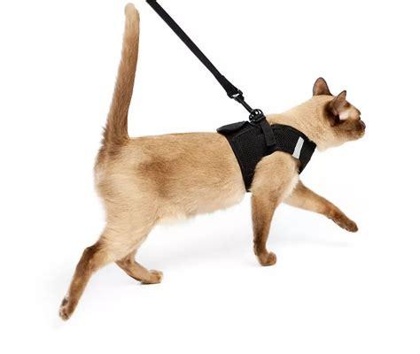 Keranjang Kucing Besar tips membawa kucing di perjalanan mudik menggunakan