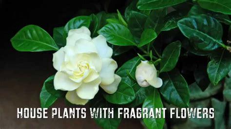 house plants  fragrant flowers youtube