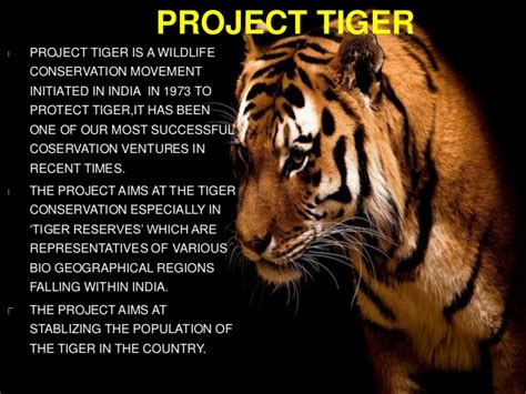 Essay On Tigers In India project tiger in india essay topics homework for you