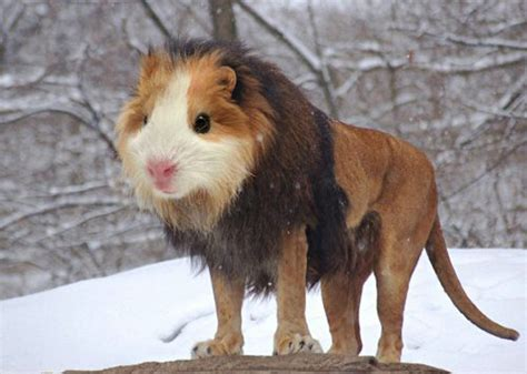 real or fake 8 bizarre hybrid animals live science 26 photoshopped animal hybrids that are straight out of a